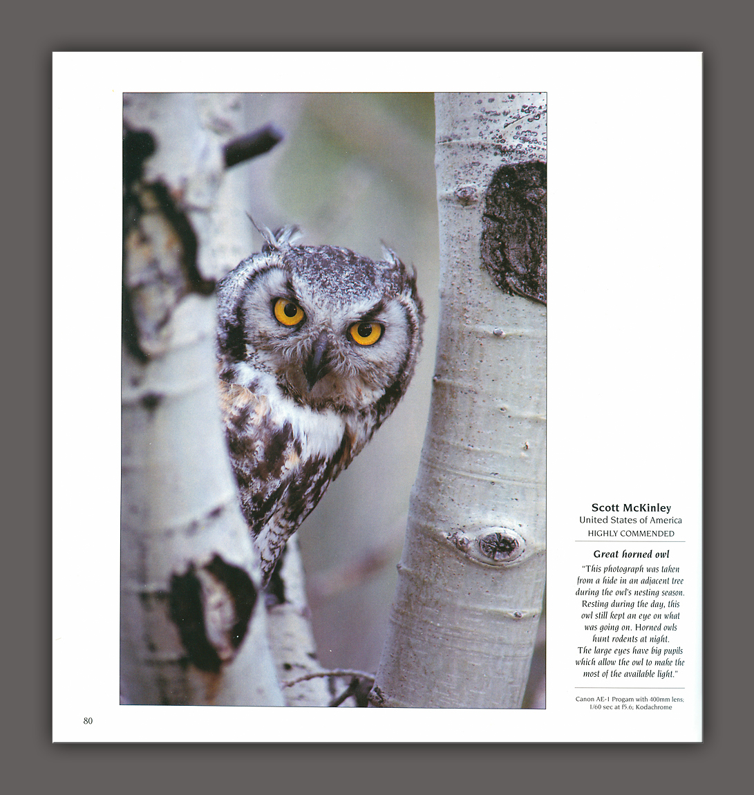 Wildlife Photog of Year #6 Inside